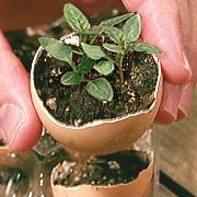 Use eggs as mini pots for seeds!  Then you replant them still in the shell which slowly biodegrades and gives lots of nutrients to the soil!