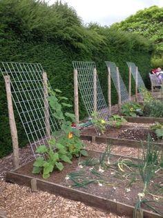 idea for squash, zucchini, cucumbers … – Plants and small vegetable garden – – diy garden landscaping Backyard Vegetable Gardens, Veg Garden, Vegetable Garden Design, Garden Trellis, Outdoor Gardens, Summer Garden, Diy Trellis, Bean Trellis, Vegetables Garden