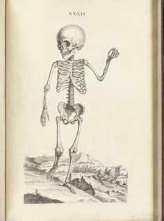Skeleton of a child one and a half years old, from William Cheselden's Osteographia, NLM Call no.: WZ 260 C499o 1733.