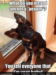 A massive collection of funny and cute animal memes, meme pictures. From funny dog meme, dog memes, husky meme to puppy meme, pet memes. Funny Animal Jokes, Funny Dog Memes, Cute Funny Animals, Animal Memes, Cute Baby Animals, Funny Cute, Top Funny, Dog Humor, Pet Memes