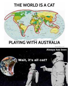 Crazy Funny Memes, Stupid Funny Memes, Funny Relatable Memes, Funny Stuff, Funny Humor, Cat Memes, Dankest Memes, Jokes, Cats Humor