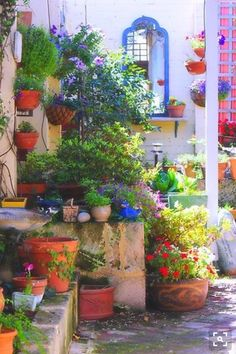 Advantages of Wall Container Gardening - Growing the gardens vertically is just using the vertical space for growing flowers, herbs or even root crops. For this purpose you can use containers. Back Gardens, Small Gardens, Outdoor Gardens, Garden Spaces, Garden Pots, Potted Garden, Potted Plants, Garden Seeds, Pot Jardin