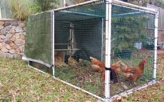 "DIY Chicken ""tractor"" - easily made and movable chicken coop that you can shift around your yard to let the chickens do all your weeding and soil fertilising for you. Am going to have chickens one day!"