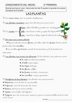 Fichas de Conocimiento del Medio (2º de Primaria) Science For Kids, Science Activities, Science And Nature, Science And Technology, Spanish Worksheets, Spanish Teaching Resources, Plant Lessons, Plant Projects, Plant Science