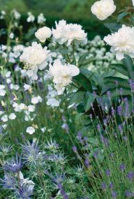 Sass: Jinny Blom -Landscape Design (Cotswolds Valley) nice mix of textures  UPDATE: Lavender and eryngium in the front, campanula (aka bellflower), and peony  landscape, gardening, flowers,