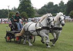 110 Best Horse Teams Images In 2012 Draft Horses Horses