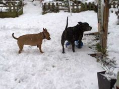 """From Kate Andrews: """"This is my view out of my back door, this is my favourite view as it involves my two favourite dogs playing with their favourite toys in the snow."""" #ViewFromYourHome #competition"""