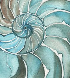 NAUTILUS shell 8.5 x 11 print of watercolour by DeepColouredWater