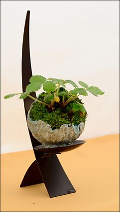 Kusamono | Tenji No Bonsai 2011 | Flickr - Photo Sharing!