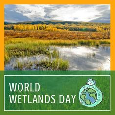 @givebackgoods posted to Instagram: Happy #WorldWetlandsDay from Give Back Goods! Today, we celebrate how wetlands, which are lands saturated by water, help maintain biodiversity on Earth . . Shop sustainable at GiveBackGoods.com (link in bio, shipping is always included). . . #GiveBackGoods #GiveBack #gogreen #ecofriendly #zerowaste #sustainability #sustainable #eco #nature #environment #green #gogreen #savetheplanet #fairtrade #handmade #organic #climatechange #fightclimatechange #earth #beth World Wetlands Day, International Holidays, Giving Back, Save The Planet, Go Green, Climate Change, Sustainability, Eco Friendly, Environment