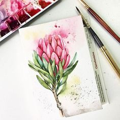 Watercolor Drawing, Watercolor Flowers, Watercolor Paintings, Watercolours, Protea Art, Protea Flower, Botanical Illustration, Watercolor Illustration, Graphic Illustration