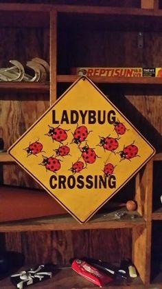 For my ladybug