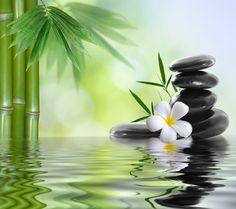 Bamboe, water, stenen, bloem