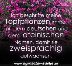 Ich beschrifte meine Topfpflanzen immer mit dem deutschen und dem lateinischen Namen, damit sie zweisprachig aufwachsen.