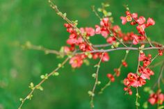 Spring blossom - Chue Foundation Norway – Norges Feng Shui forbund for Chue style Feng Shui konsulenter.