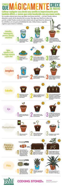 Gardening: Grow Vegetable Plants from Kitchen Scraps! Easy Gardening: Growing Vegetables Plants from Kitchen Scraps!Easy Gardening: Growing Vegetables Plants from Kitchen Scraps! Herb Garden, Garden Plants, Garden Web, Patio Plants, Plants Indoor, Garden Soil, Green Garden, Tropical Garden, Potted Plants