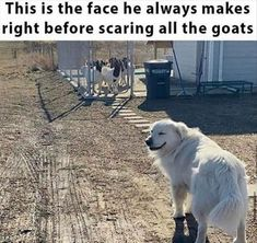 Top 28 Funny Animal Memes Of The Day Dog Jokes, Funny Dog Memes, Funny Animal Memes, Cute Funny Animals, Funny Relatable Memes, Cute Baby Animals, Cat Memes, Funny Cute, Funny Dogs