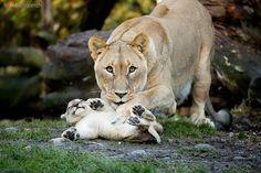Și animalele pot fi părinți grozavi 14