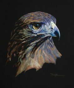 Magistic Raptor, Red-tailed Hawk by Mary Dove Oil Pastel Painting ~ 26 x 22 Small Canvas Paintings, Oil Pastel Paintings, Oil Pastel Art, Oil Pastels, Canvas Art, Black Paper Drawing, Pastel Drawing, Eagle Wallpaper, Eagle Painting