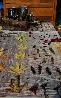 Fiona Duthie: Eco Dyeing October 2011