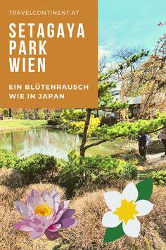 Einer der zauberhaftesten #Parks in #Wien, das ist der japanische #Garten. Im Frühling wird er zu einem Blütenmeer an Magnolien, Kirschblüten u. exotischen #Pflanzen. Hier findest du Fotos und Tipps für den Besuch der Sehenswürdigkeit #gartenkunst #ausflugsziele #österreich Parks, Pictures, Exotic Plants, Magnolias, Garden Art, Road Trip Destinations, Tips, Parkas