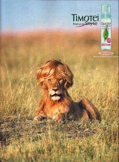 Girly Lion !