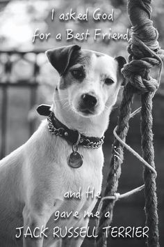Jack Russell Best Friend https://www.facebook.com/heavenlypetphotography/photos/pb.345733968862639.-2207520000.1448131956./499949493441085/?type=3&theater