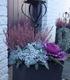 6 bright autumn plants for garden and flower boxes - Silver leaf, ornamental cabbage and heather in a planter - Winter Planter, Fall Planters, Container Flowers, Container Plants, Beautiful Gardens, Beautiful Flowers, Ornamental Cabbage, Balcony Flowers, Fall Containers