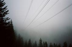 fog + phone lines
