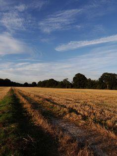 Ifield Brook Meadows