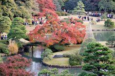 Rikugien Garden: Tokyo's 88 Minature Gardens - Japan Talk - MOST BEAUTIFUL LANDSCAPE GARDEN IN TOKYO 9-5 PM 300 YEN - REST AT FUKIAGE CHAYA TEAHOUSE 510 YEN  http://www.japan-guide.com/e/e3026.html