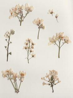 warmkid:  please appreciate my pressed flowers