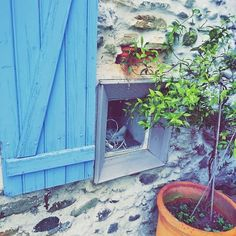 Jasmin bleu pierre