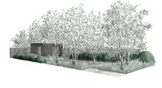Tom Stuart-Smith's Laurent Perrier garden in the Chelsea Flower Show