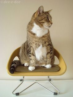 Love chubby cats on retro mini chairs!