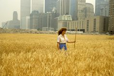 THE ORIGINAL GUERRILLA GARDENING? A full-size wheat field planted on landfill in New York City (1982).
