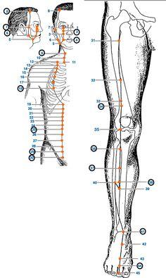 Meridian Acupuncture, Acupuncture Benefits, Acupuncture Points, Acupressure Points, Acupressure Therapy, Acupressure Treatment, Ear Reflexology, Ayurvedic Healing, Medical Anatomy