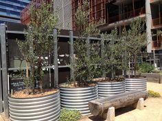 Docklands Community Garden - The Greening of Gavin