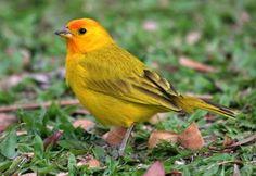 Fotos de aves brasileiras