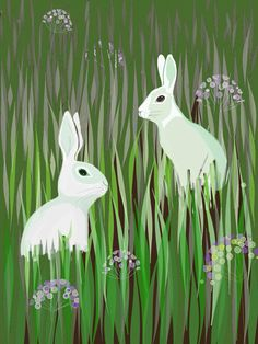 Rabbits in a field