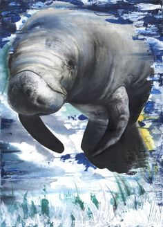 Manatee  30x40  Mixed Media:color pencils, pastels, and watercolors on watercolor paper