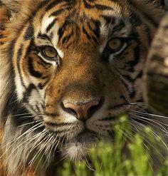 majestic animal