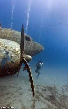 Looming out of the darkness: Wrecks act as artificial reefs which makes them interesting t...