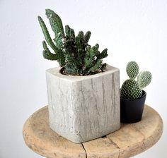 Mrkněte se, jak se vyrábí dekorativní betonové květináče do interiéru. Nejlépe sluší kaktusům a sukulentům. Nechte se inspirovat na mém blogu o bydlení.