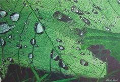 How to Paint Raindrops on a Leaf in Watercolour