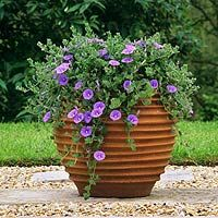 More container ideas - I found beautiful large containers at Ocean State Job Lot last year that were very inexpensive ( and fun to fill ).