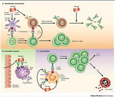 Hyposensitization for Nickel and Iron Oxide Allergies #eczema #dermatitis…