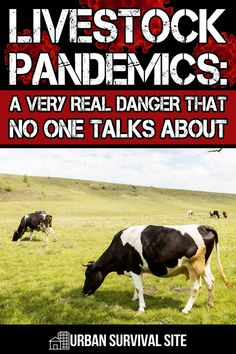 All the news is about COVID-19, but there are livestock pandemics raging right now, and it can only make things worse. Here's what you should know. Survival Food, Survival Tips, Survival Skills, Doomsday Preppers, Disaster Preparedness, Homesteads, Animals Of The World, Zombie Apocalypse, Livestock