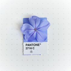 tiny-objects-paired-with-matching-pantone-09