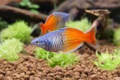 Jak czyścić filtr akwariowy?